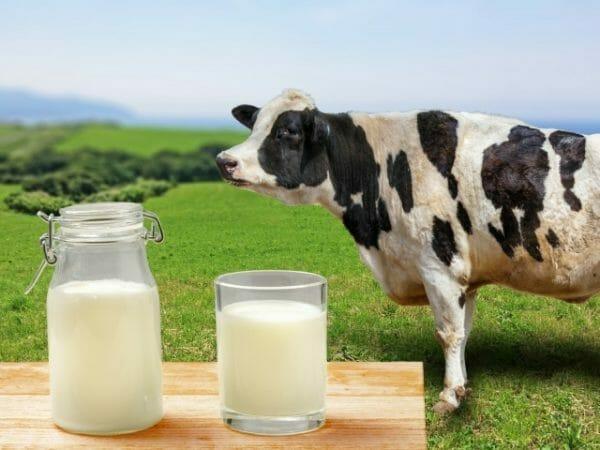 日本人がお腹を下してしまう牛乳のイメージ