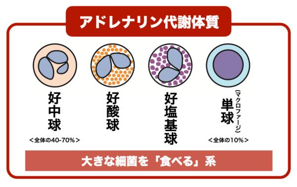カラダの中にある白血球の種類についてわかりやすくまとめたイメージ