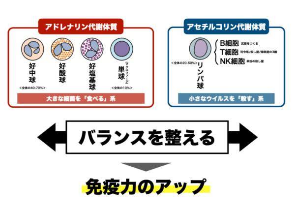 「食べる」系の白血球と「殺す」系の白血球とがバランスよく働くことで総合的な免疫力はアップすることを表した画像