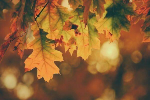 気候とストレスが食欲に関係していることをイメージさせる秋の葉っぱの画像