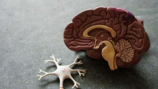 身体の様々な不調は大脳新皮質に酸素が行き渡らないことが原因で起こることのイメージ