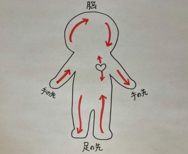 血液の働きは酸素・栄養を全身に運ぶということをわかりやす表したイラスト