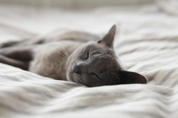 寝る前にカラダを動かしたせいで朝居眠りになってしまった猫のイメージ