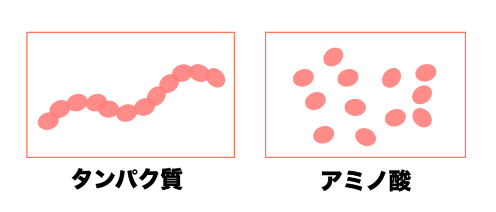 タンパク質とアミノ酸の違いを分かりやすくまとめた画像