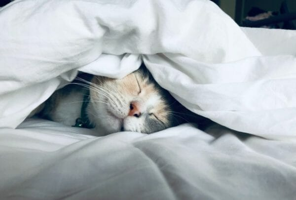 睡眠不足で体調が悪くなっている猫のイメージ